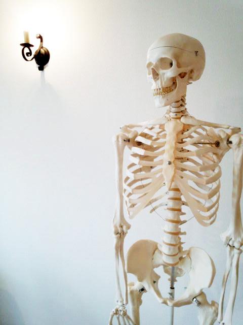 ヨガ・ピラティスを解剖学的見解から理解しようイメージ