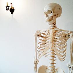 ヨガ・ピラティスを解剖学的見解から理解しよう